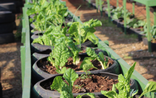 SMMS-sustainable-farming-efforts